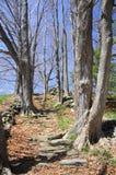 Laurel Ridge Daffodil Park royalty-vrije stock fotografie