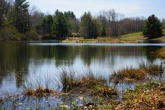 Laurel Ridge Daffodil Park America royalty-vrije stock afbeeldingen
