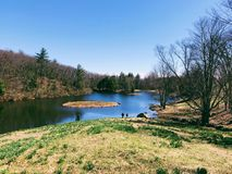 Laurel ridge spring views in litchfield Connecticut. Yellow daffodils flowers blooming in early spring laurel ridge litchfield Connecticut United States on a royalty free stock image