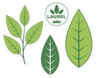 Laurel Stock Images