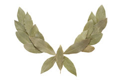 Laurel wreath Stock Image