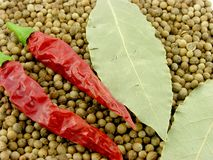 laurels καρυκεύματα πιπεριών Στοκ Εικόνες