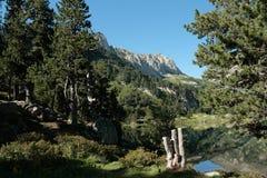 Laurenti Scheitel in Pyrenees Stockfotos
