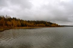 Laurie Lake shoreline with colorful trees. In autumn on an overcast day Stock Photo