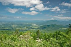 Laurier de montagne, Ridge Mountains bleu et vallée de Shenandoah Image libre de droits
