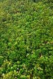 Laurierbos in Canarische Eilanden Royalty-vrije Stock Afbeeldingen
