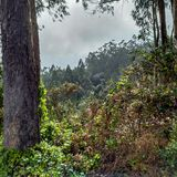 Laurisilva las w madery wyspie pogodą sztormową zdjęcia stock
