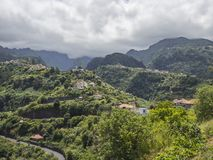 Laurissilva Forest Madeira photo stock