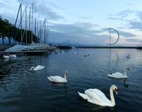 Lausanne-Kai von Geneva See mit Schwänen und Yacht, die Schweiz stockfotografie