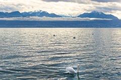 Lausanne kaj av Genève sjön och en svan Arkivfoton