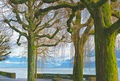 Lausanne kaj av Genève sjön och träd som täckas av mossa Arkivfoto