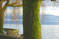 Lausanne quay of Geneva Lake and moss covered trees Royalty Free Stock Photos