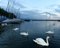 Lausanne quay of Geneva Lake with swans and yacht, Switzerland.  Stock Photography