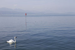Lausanne swan Royalty Free Stock Images