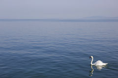 Lausanne swan Stock Image