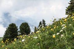 Lautenbrunen dolina w Alps, Szwajcaria Zdjęcie Royalty Free