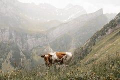 Lauterbrunnen Schweiz - Europa arkivbilder