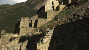 Lautes Summen heraus schoss von den Lamas und von den Ruinen auf machu picchu stock video