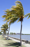 Lautoka City Park. The row of palms in Lautoka, the second largest city in Fiji stock image