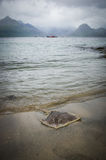 Lavé vers le haut de la pastenague par temps orageux sur la plage dans Elgol sur l'île de Skye en Ecosse image stock