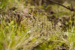 Lav i ett gräs Royaltyfria Bilder