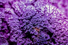 Lav i ultraviolet Royaltyfria Bilder