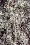 Lav på closeupen för trädskäll Arkivfoton