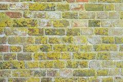 Lav på den gamla väggen Royaltyfri Bild