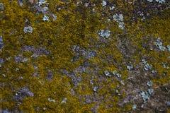 Lav på en grå stenvägg Arkivfoton