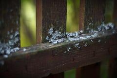 Lav på staketet royaltyfria bilder