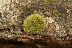Lav på stenen Royaltyfri Foto