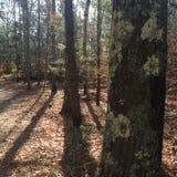 Lav på träd arkivbild