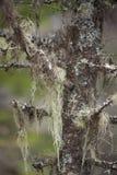 Lav på träd Arkivfoton