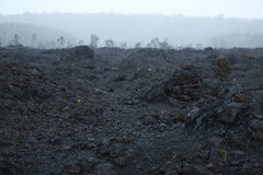 Lava. Plants and trees emerge from the volcanic landscape in Hawai'i Volcanoes National Park royalty free stock photo