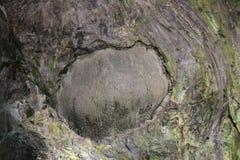 lava Algar gör Carvao, treceira Arkivfoton