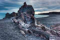 Lava beach, Western Iceland royalty free stock photography