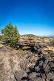 Lava beds and lava flow area Royalty Free Stock Image