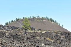 Lava Butte Royaltyfri Fotografi