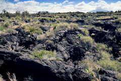 Lava covered with desert vegetation.  Valley of  Fires Recreatio Royalty Free Stock Image