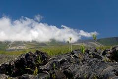 Lava Eruption at La Fournaise on Reunion island. Coulee de Lave Stock Image