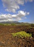 Lava-Felder von Maui Stockbild