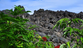 Lava Field Adorned by Brilliant Foliage Royalty Free Stock Photography