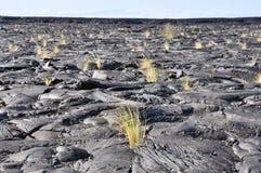 Lava field, Big Island, Hawaii royalty free stock photography