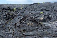 Lava Field on Big Island of Hawaii Stock Images