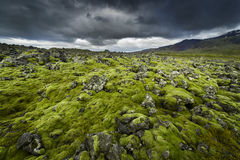 Lava field covered with moss Royalty Free Stock Images
