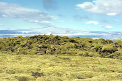 Lava field at Eldhraun. Iceland Royalty Free Stock Images