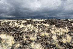 Lava Field erboso Fotografia Stock