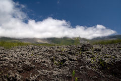 Lava field Stock Images