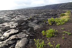 Lava Field in Hawaii Royalty Free Stock Photography