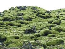 Lava Field muscoso verde stupefacente in Islanda del sud, fondo fotografia stock libera da diritti